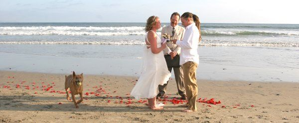 doyle the pound puppy and his mom and dad on dog beach coronado.  elopement ceremony with christine...