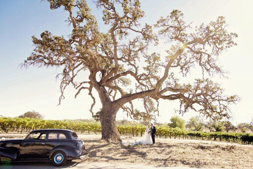 091939c8b7d99ff8 1473208445549 oak tree and car photo