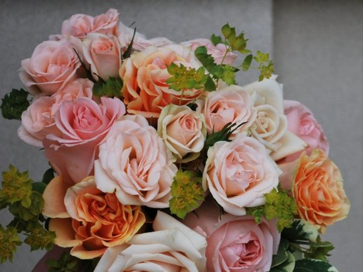 Tmx 1308155404890 DSC0021 Havre De Grace, Maryland wedding florist