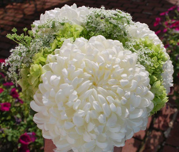 Tmx 1311014739792 DSC0112 Havre De Grace, Maryland wedding florist