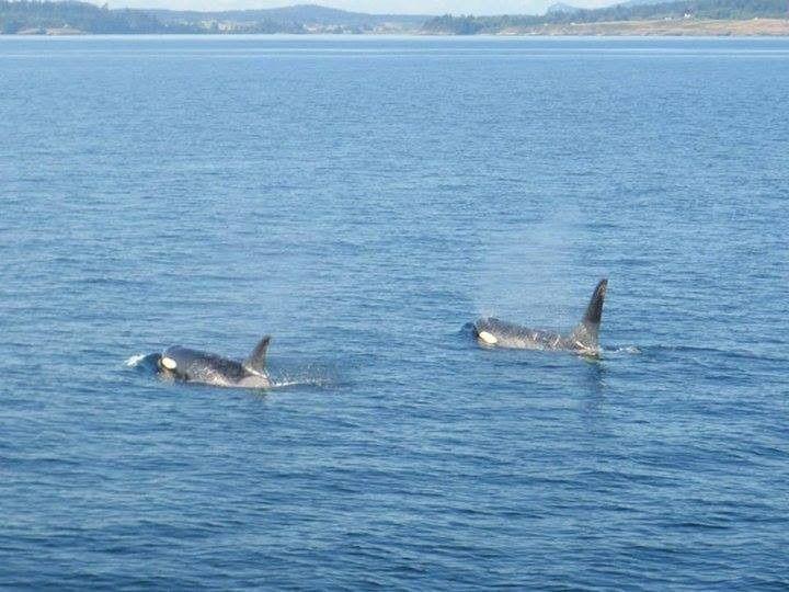 jen whales