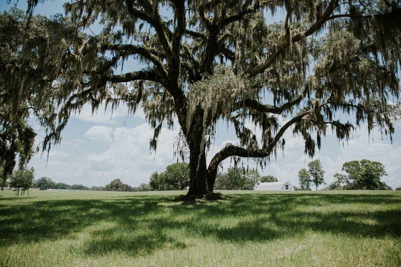 Ceremony Tree