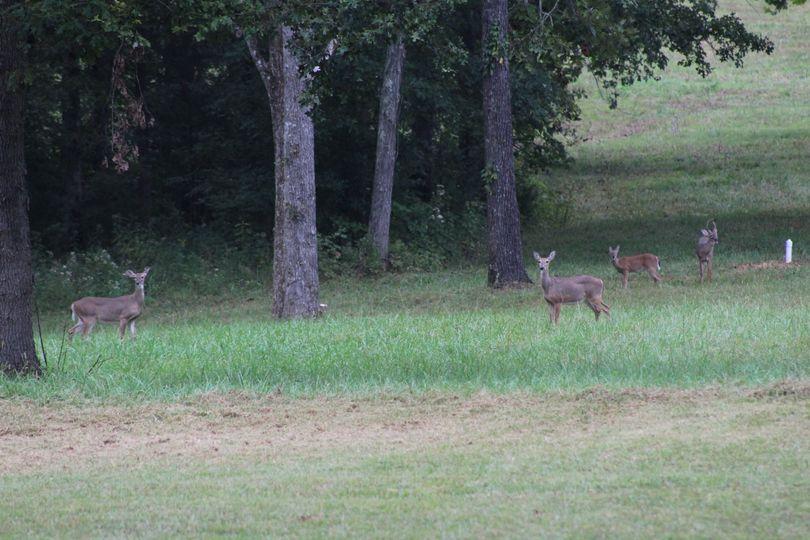 Tennessee Memories Wildlife