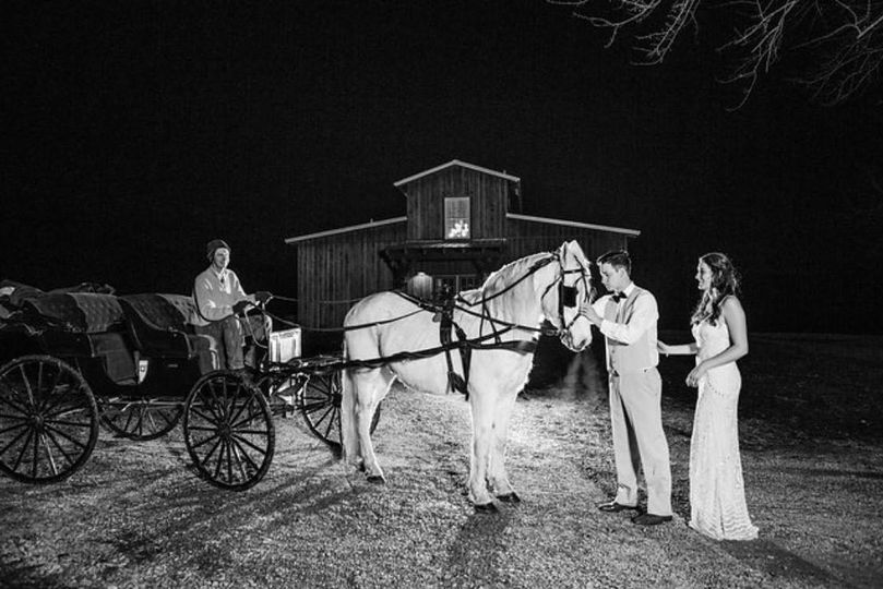 Newlyweds with the horse