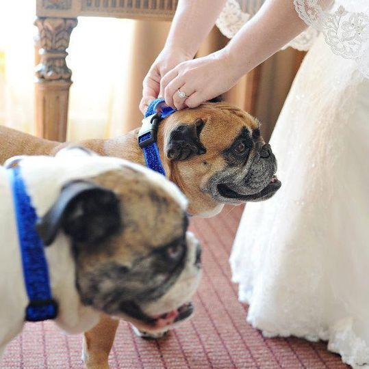 Dream Imagine Studios - Heirloom Weddings™& Special Events