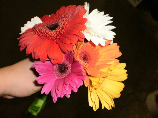 Tmx 1296073362826 GerbBouquet Waynesboro wedding florist