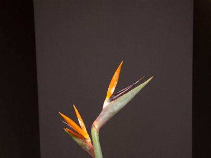 Tmx 1296075479123 IMG1911 Waynesboro wedding florist