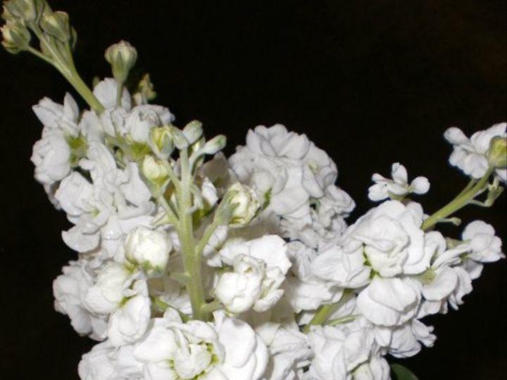 Tmx 1296075510670 StockBouquet Waynesboro wedding florist
