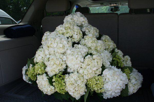 Tmx 1296076641436 IMG3061 Waynesboro wedding florist