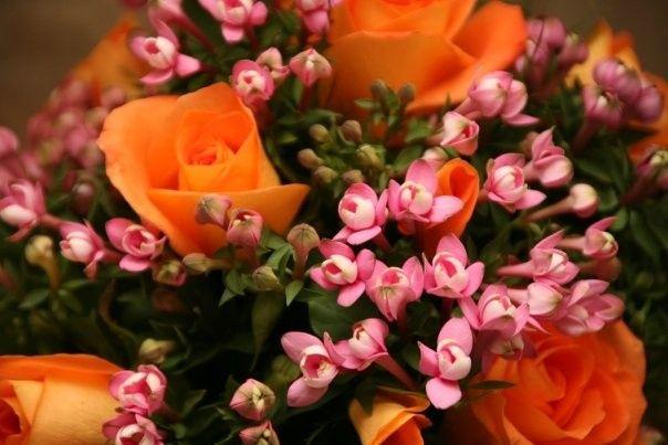 Tmx 1383245754681 K Mashpee, MA wedding florist