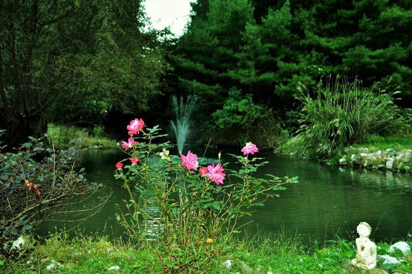 rose 51 1022621
