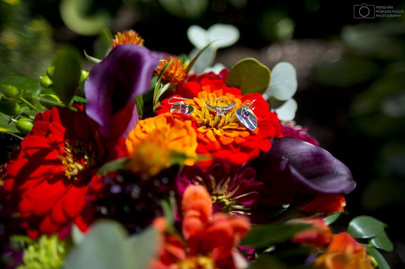 Vivid and colorful flowers - Meaghan Morgan-Puglisi Photography