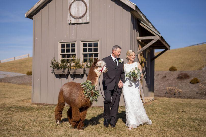 We love alpacas