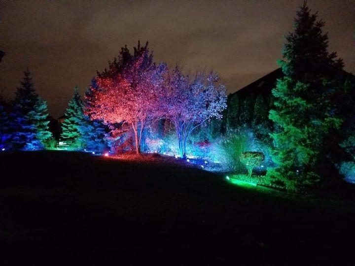 Event - Tree Wash Lighting