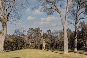 Mill Pine
