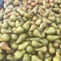 Estate pears