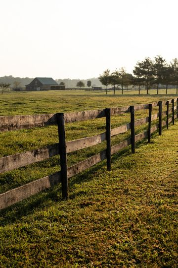 The paddocks fence