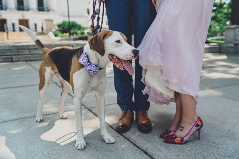 Dog and brides