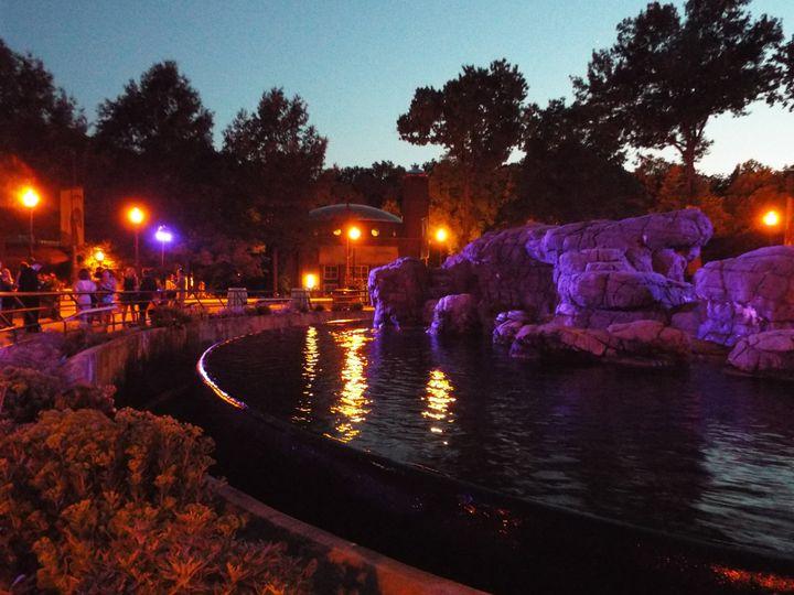 Sea lion pool at night