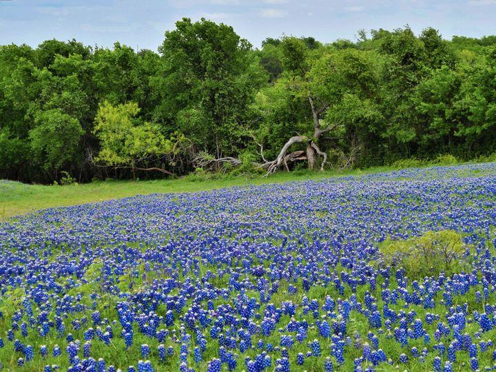 Tmx Dsc 0993 51 1060531 157799795880671 McGregor, TX wedding venue