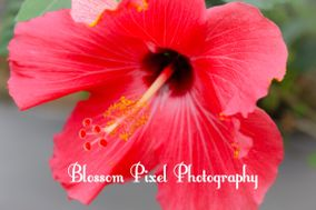 Blossom Pixel Photography