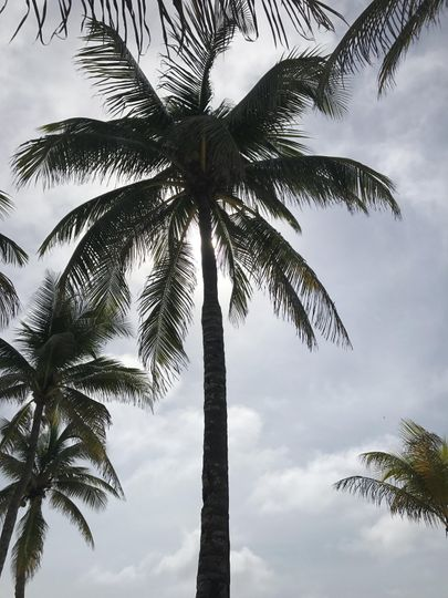 Perfect shade trees