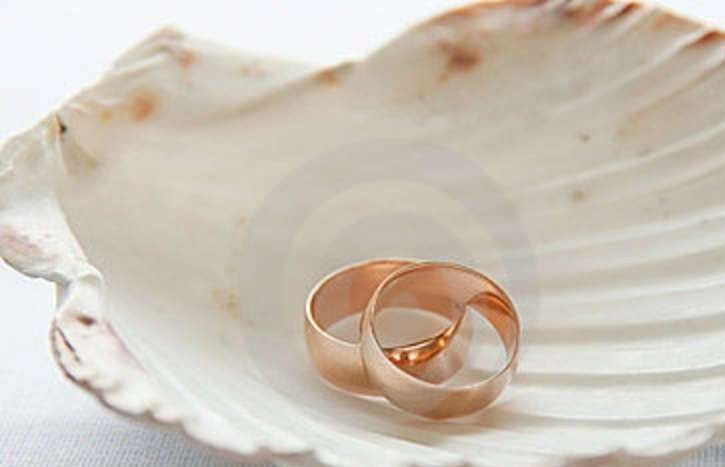 wedding rings seashell 23764463
