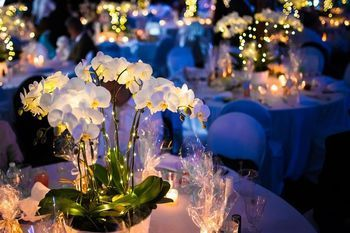 Tmx Image 51 1897631 159777084042867 North Hampton, NH wedding florist