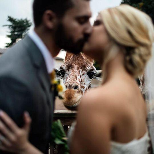 Can't keep my eyes off of you....enjoy your very own personal giraffe feeding at Karibu Hut