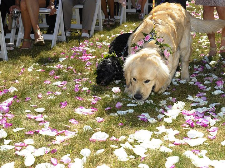 Tmx Dog Wedding 51 46931 North Conway, NH wedding venue