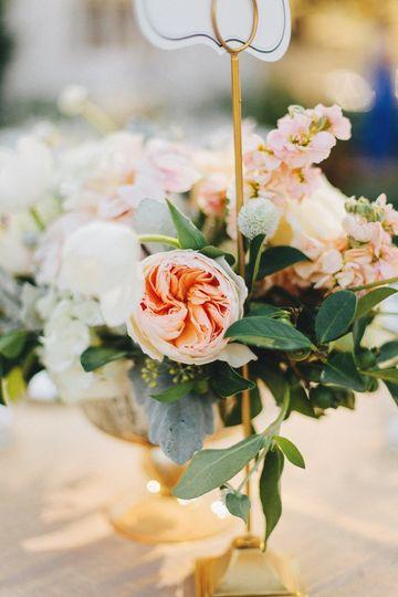 Peach garden rose details