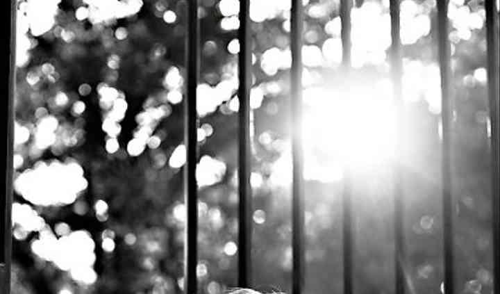 Alicia Pyne Photography