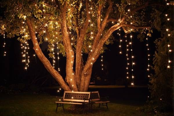 Lights at the tree
