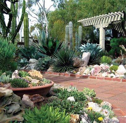 cactus3 reduced