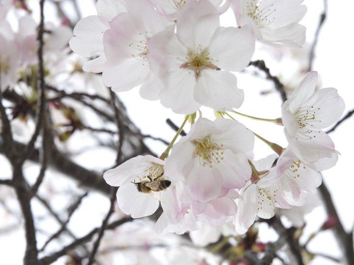 Tmx Blossom 51 523341 Norwalk, IA wedding venue