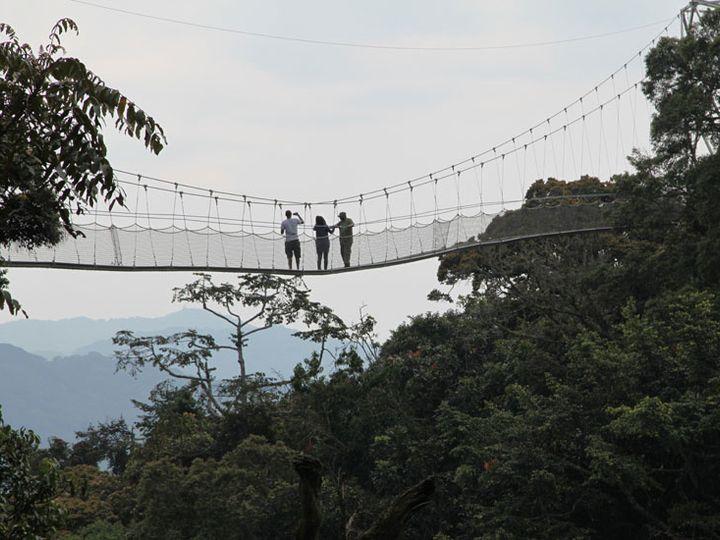 Tmx Canopy Walk Rwanda 51 1040541 Virginia Beach, VA wedding travel