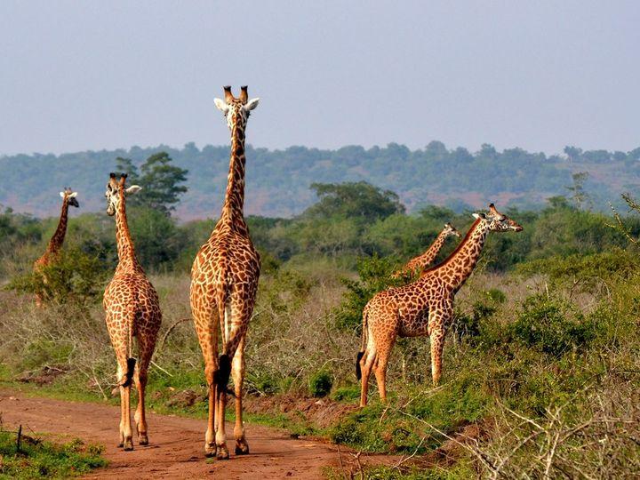 Tmx Girafee 51 1040541 Virginia Beach, VA wedding travel