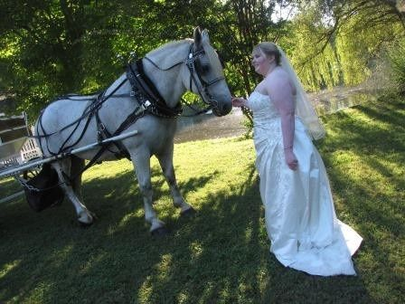 Horse with bride
