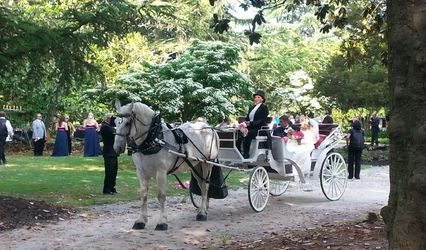 Carolina Horse and Carriage 1