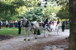Carolina Horse and Carriage image