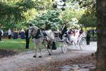Carolina Horse and Carriage image