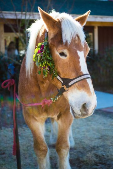 Cape Fear Vineyard and Winery horse