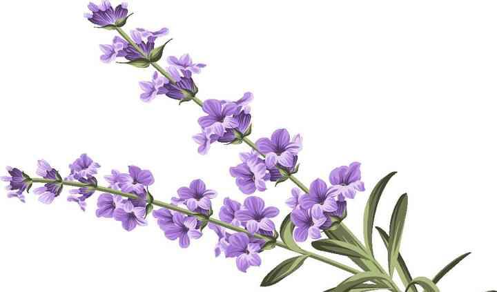 Lavender Lace Cakes