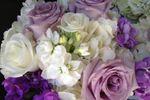 Tahoe Blooms image