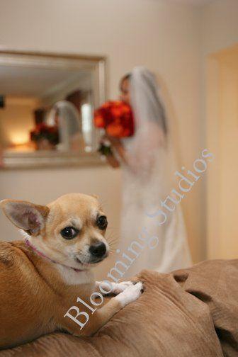 Tmx 1281653380760 Weddingportrait Bedminster wedding photography