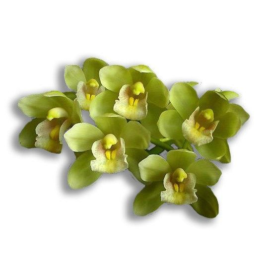 Amazon Gold Orchid