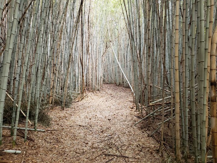 Bamboo forest trails