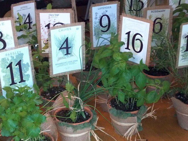 Tmx 1378727781713 Herb Plants Simsbury, CT wedding eventproduction