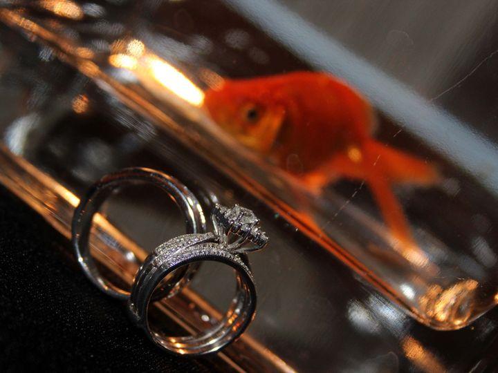 Tmx 1438035732219 Freeman Wedding 714 C Greensboro, NC wedding photography
