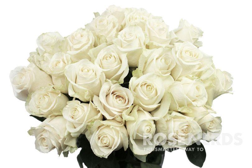 Wholesale white roses - 50 cm long
